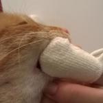 Jak prawidłowo dbać o zęby kota?